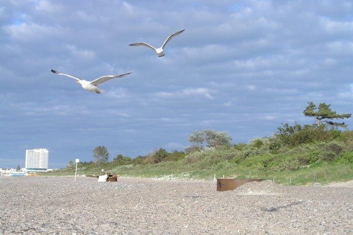 Auf dem Foto sind zwei fliegende Möwen zu sehen am Strand von Warnemünde. Das rechts erkennbare große weiße Haus ist das Neptun Hotel in Warnemünde.