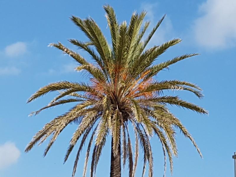Das Foto zeigt eine Palme.