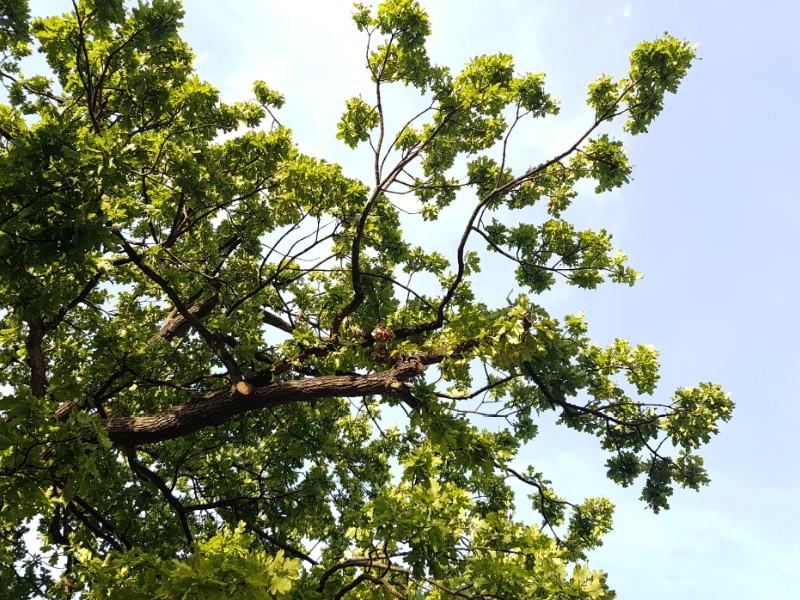 Auf dem Foto ist ein belaubter Ast eines Baumes zu sehen.