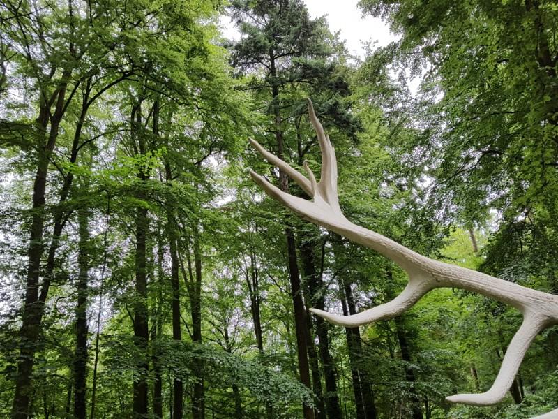 Das im Wald aufgenommene Foto zeigt mehrere Bäume sowie eine Seite eines Hirschgeweihes.
