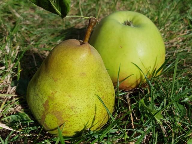 Das Foto zeigt eine Birne und einen Apfel im grünen Gras liegend.