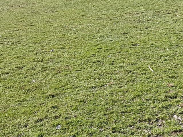 Das Foto zeigt den Ausschnitt einer auf einem Grundstück befindlichen Graswiese.