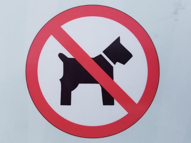 Das Foto zeigt ein Hundeverbotsschild, bestehend aus einem roten Kreis und einem Hund in der Mitte, welcher rot durchgestrichen ist.